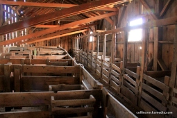 Animal compartments in the barn