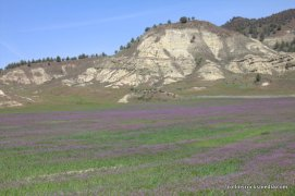 Paleosols with purple flowers in the foreground
