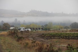 Mist in the Willamette Valley.